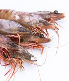 Big fresh tiger prawns. Shrimp isolated Stock Photos