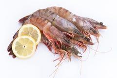 Big fresh tiger prawns. Shrimp isolated Royalty Free Stock Photo