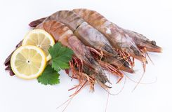 Big fresh tiger prawns, shrimp isolated. On white Royalty Free Stock Photography