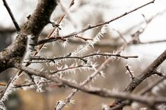 Big frost on the branches of a tree royalty free stock photo