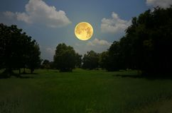 Big full moon over green trees in the field. Big full moon over green trees in the rice field in the evening royalty free stock photo