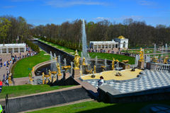 Big Fuontain cascade in Peterhof, St. Petersburg, Russia. Big Fountain cascade in Lower garden of Peterhof, St. Petersburg, Russia Royalty Free Stock Image