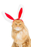 Big ginger cat in christmas rabbit ears head rim Royalty Free Stock Images
