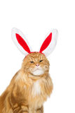 Big ginger cat in christmas rabbit ears head rim Royalty Free Stock Photos