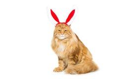 Big ginger cat in christmas rabbit ears head rim Royalty Free Stock Image