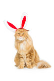 Big ginger cat in christmas rabbit ears head rim. Big adorable ginger maine coon cat in christmas rabbit ears head rim. Isolated on white background. Copy space Stock Photo