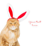 Big ginger cat in christmas rabbit ears head rim Stock Photography