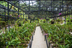 Big glasshouse full of orchid flowers Stock Photo