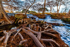 Big Gnarly Cypress Roots Surrounding River and Wat. Beautiful Flowing Waterfall with Big Cypress Trees and Giant Gnarly Roots in the Texas Hill Country Royalty Free Stock Image