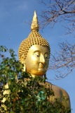 Big golden buddha with blue sky. Stock Images