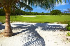 Big golf field with a palmtree. Big golf field wiht a palmtree in a sunny day Royalty Free Stock Photo