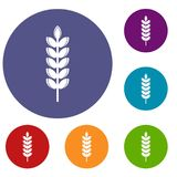 Big grain spike icons set. In flat circle red, blue and green color for web Stock Images