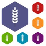 Big grain spike icons set hexagon Stock Photography