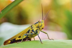 close-up of a grasshopper in the garden stock photography