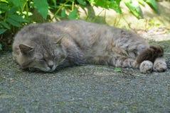 Gray cat lies and sleeps on the pavement. Big gray cat lies and sleeps on the pavement stock image