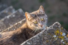 Big gray cat lying on the stairs.  stock photo