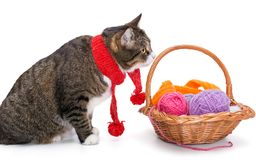 Big gray cat in a red scarf. And a basket of thread, isolated on white stock photography