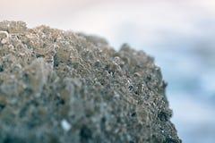 Big gray rocks at a beach. Close-up royalty free stock images