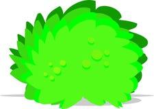 Big green bush Royalty Free Stock Image
