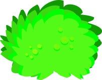 Big green bush Stock Image