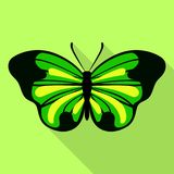 Big green butterfly icon, flat style. Big green butterfly icon. Flat illustration of big green butterfly vector icon for web design Royalty Free Stock Images