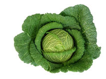 Big green cabbage Royalty Free Stock Image