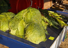 Big Green Cabbage Heads Stock Photos