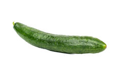 Big green cucumber. Big and long green cucumber isolated on white background royalty free stock images