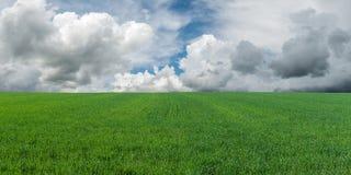 Big green field Stock Photos