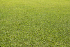 Big Green grass lawn yard Stock Photos