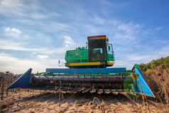Big green harvester in the field on a sunny day mowing ripe, dry sunflower seeds. Stock Photo