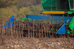 Big green harvester in the field on a sunny day mowing ripe, dry sunflower seeds. Stock Image