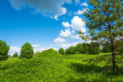 Big green hill with yellow flowers. Royalty Free Stock Image