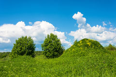 Big green hill with yellow flowers. Royalty Free Stock Photo