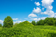 Big green hill with yellow flowers. Royalty Free Stock Images