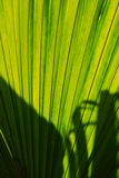 A big green leaf. With some shadow Royalty Free Stock Photography