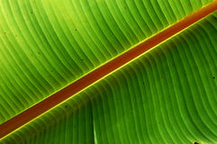 Big green leaf. In the gardens Stock Images