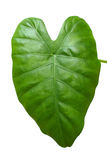 Big green leaf. Isolated on white Stock Photo