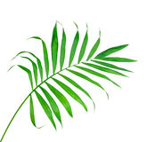 Big Green Leaf of Fern Isolated On The White Stock Photos