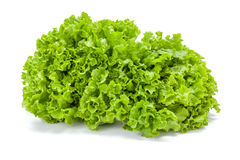Big green leaf lettuce Stock Image