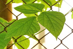 Big green leaf pattern with steel grille. Stock Photos