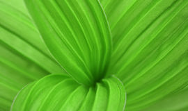 Big green leaf of a plant Stock Photography
