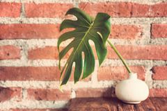 Big green leaf in a small white vase on wood table with rough br. Big green leaf in a small white vase sitting on wood table against rough brick wall, vintage Royalty Free Stock Images