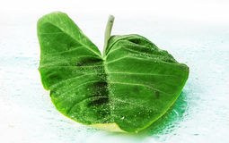 Big green leaf. With water droplets Closeup Royalty Free Stock Images