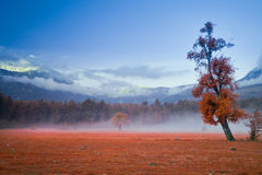 Big green lonely tree on the field at foggy Royalty Free Stock Photography