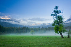 Big green lonely tree on the field at foggy Royalty Free Stock Image