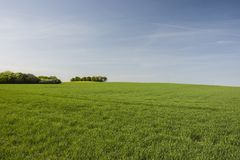 Big green meadow, copse and blue sky. Large green meadow, copse on the horizon and blue sky stock image