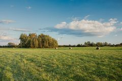 Big green meadow, copse and cloud in the sky. Big green meadow, copse and cloud in the blue sky stock photo