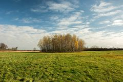 Big green meadow and autumn copse. Big green meadow, copse and white clouds on blue sky - autumn view stock photo