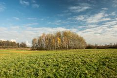 Big green meadow, copse and white clouds on sky. Big green meadow, copse and white clouds on blue sky - autumn view royalty free stock photo
